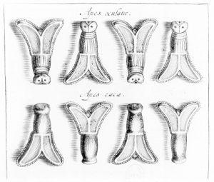 Quelques abeilles tirées du Trésor de Childéric (Chifflet, 1655)