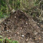 Tas de broyat de branches décomposé