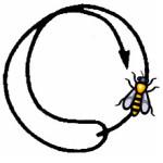 La communication visible des abeilles