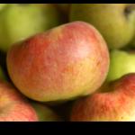 Les pommes du verger