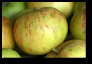Une pomme Jacques Lebel