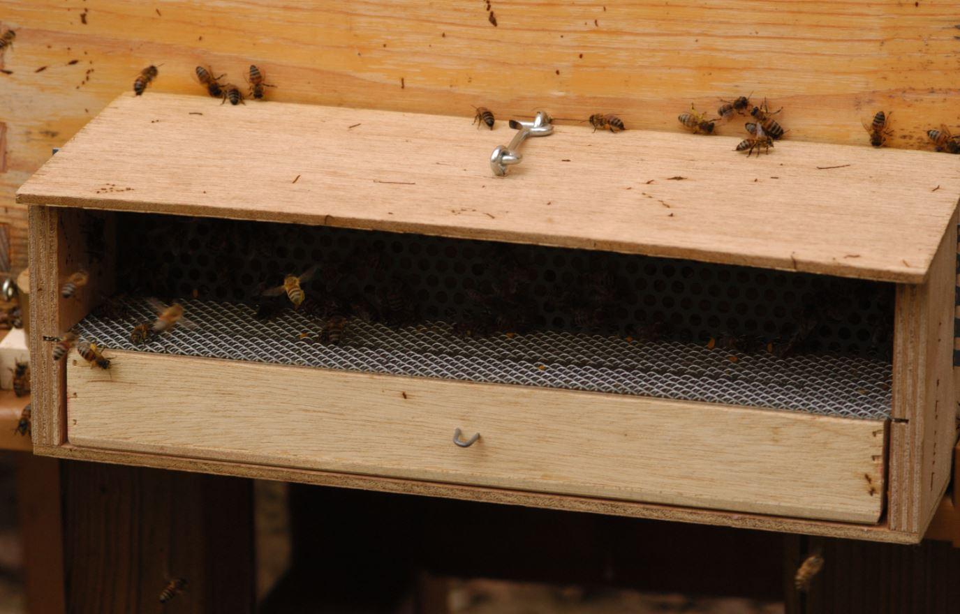 Piège à pollen fixé à la ruche